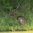 Peura Keoladeo National Park