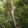 Canopy walkway Penang Hill