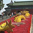 Kukkalohikäärme, Beijing