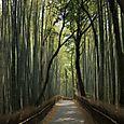 Bambu puisto, Kyoto