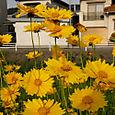 Yellow at Kanazawa