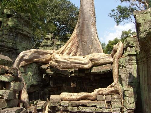 Puun juuria Ta Phrom