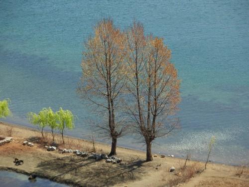 Rannan puita, Lugu Hu