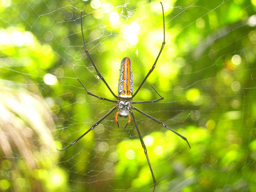 Kaunis hämähäkki