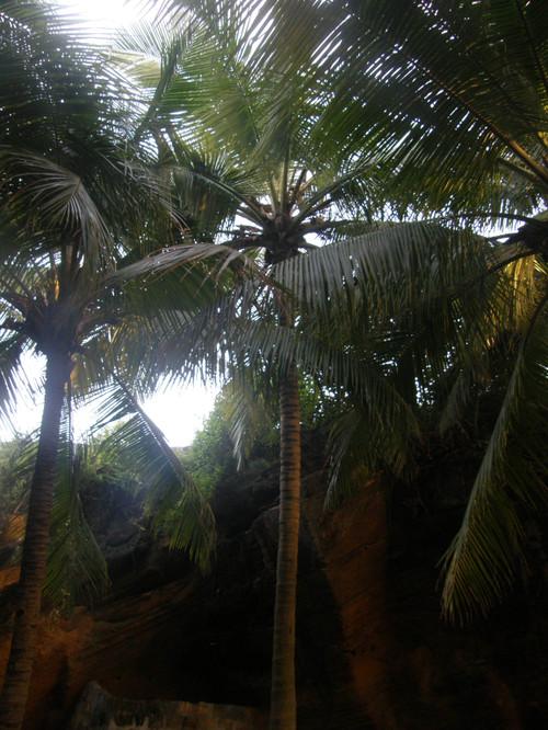 Kauniita palmuja
