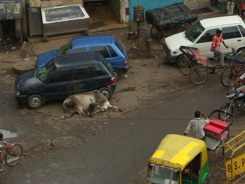 Lehmä Delhin kadulla