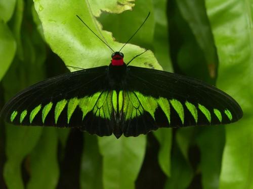 Perhospuistossa Kuala Lumpur