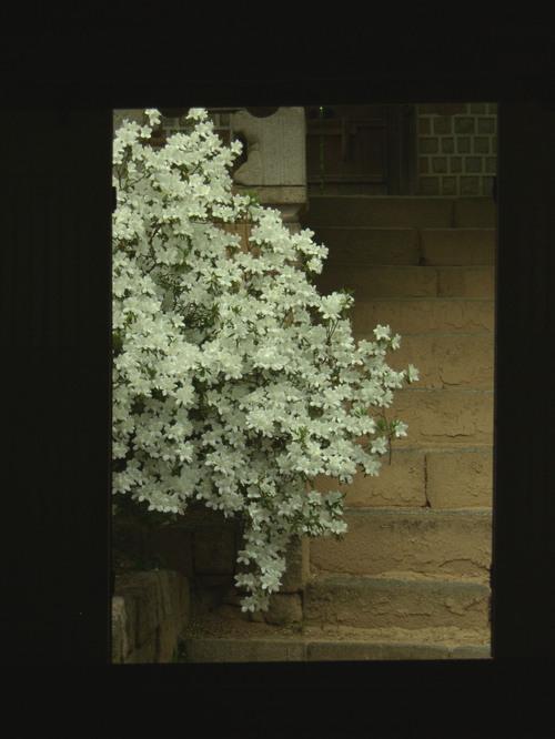 Yksityiskohtaa, Changdeokgung Palace