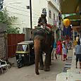 Elefantti Udaipur
