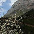 Jylhä vuori, Lige