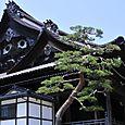 Nishi Betsuin Temple, Kanazawa