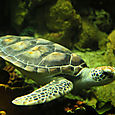 Kilpikonna, SeaWorld, San Diego