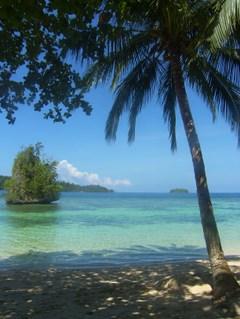 Black_marlin_kadidiri_togian_island