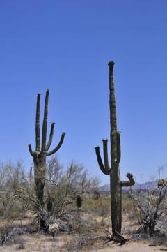 Cactus_tekstin_kuva