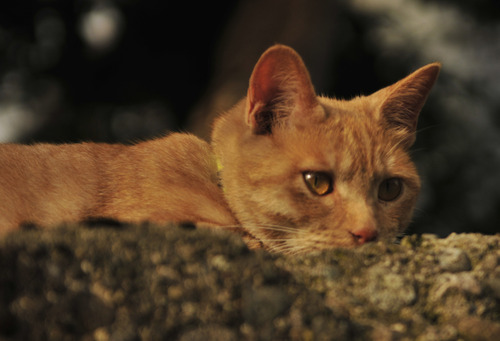 Kissa aidalla, Kanazawa