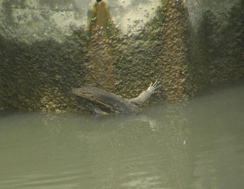 Lisko joessa Melaka