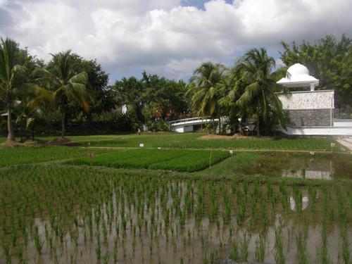 Riisi museon puutarhaa Langkawi