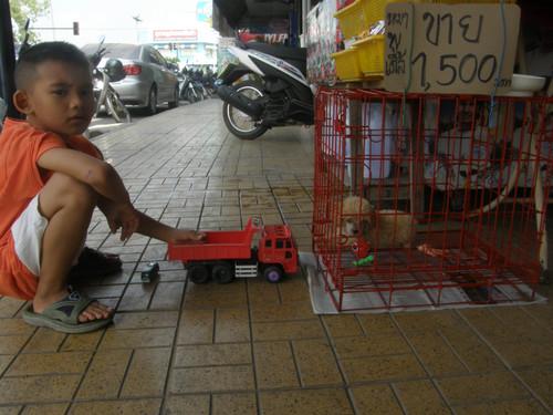 Katu näkymää Surat Thani